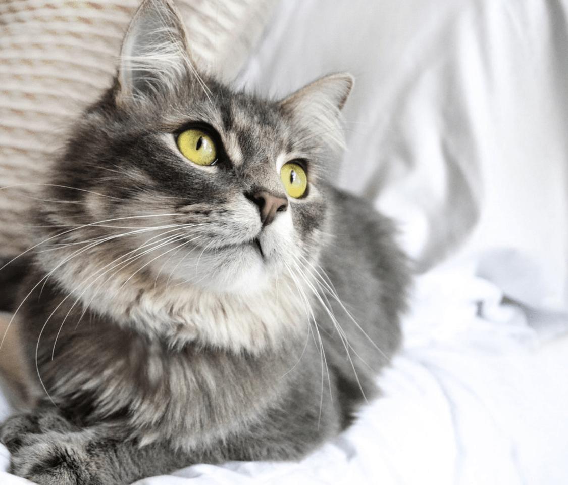 猫の写真でフォトブックを作成